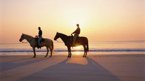 horseback-cabo-fishing-charters