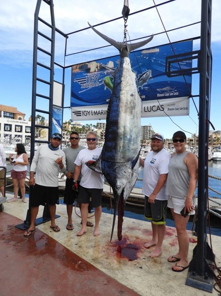 massive sword fish caught in Cabo