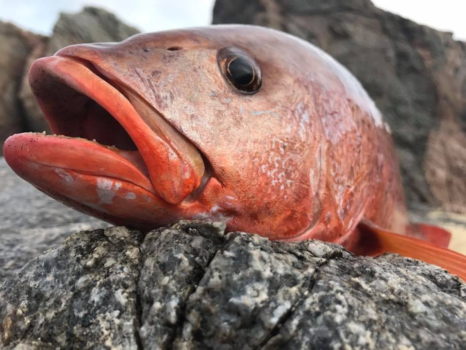 red fish caught in Cabo
